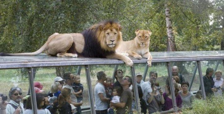 Зоопарк Туари